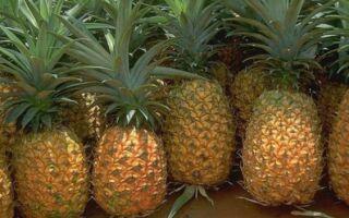 Рецепт ананасових млинців